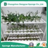 Quadrada esponja com orifícios de espuma de mudas de legumes hidroponia branco