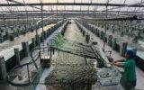 Organisch Poeder Spirulina met Lage Prijs