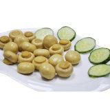Champignon de couche en boîte par champignon de paris chaud de variété de vente