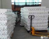 Het geweven het Smelten van de Polyester Interlining voor Dun Kledingstuk