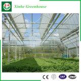 Дом листа/пластмассы/стеклянных поликарбоната зеленая для овощей/сада