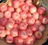Nueva estrella Apple roja con alta calidad