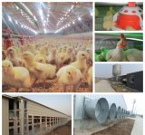 Poultry Equipments를 가진 Prefabricated Light Steel Structure Farm