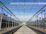 Tomate Vegetable Greenhouse para Sale