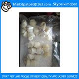 Het Huisdier van de Sandwich van de Kabeljauw van de kip behandelt voor de Leverancier van China van de Hond