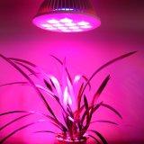 O melhor diodo emissor de luz cresce claro com 3 anos de garantia