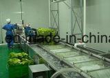 Vente chaude dans la machine à laver de bulle de Philippines pour le légume vert