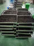Máquina da fermentação do alho preto de alta qualidade
