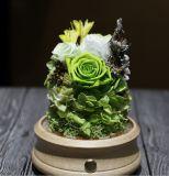 Commerce de gros beau vert préservé Rose en dôme de verre avec de la musique