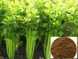 Extrait de Celandine, extrait de Celandine de qualité pour des nourritures et Supperment