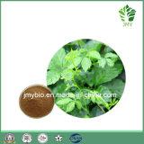 Extrait chinois de gynostemmes à base de plantes Gypénosides 80%, 95%, 98% par UV