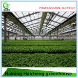 Hydroponic 시스템 농업 온실