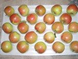 Красный Гала Apple