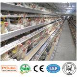 Cages de poulet de batterie de ferme de poulet de structure métallique