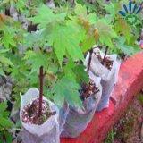 Nichtgewebter Gewebe-Pflanzensämling sackt abbaubaren züchtend Beutel ein