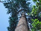 Искусственная пальма/закамуфлированная пальма/Bionic пальма для башни украшения/пальмы