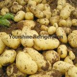 Professional Cold Storage modulaire pour les pommes de terre
