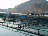 HDPE Rohr für Quadrat-sich hin- und herbewegende Aquakultur-Fischzucht-Rahmen