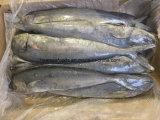 Mahiのシーフードによってフリーズされる魚の切身のMahi Mahiの卸売価格