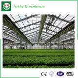 Estufa de vidro do baixo custo do fornecedor de China para a plantação vegetal