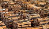 حلقة نوع [بيلينغ مشن] خشبيّة يستعمل لأنّ تقشير ومقاصّة فوق [نيدل ووود]/[بين تر]/شجرة أوكالبتوس