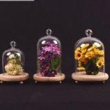 Tarro hermoso del regalo de la decoración del tarro micro casero de cristal del paisaje