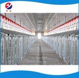 現代ブタまたはブタの農場によってカスタマイズされる高品質のオーガーまたはディスク鎖自動挿入システム養豚装置