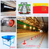 Volaille House Equipment avec Good Quality From Chine Manufacturer