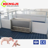 Hot Sale Pig Feeder for Finishing Pig