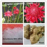 Zingiber Zerumbet puros e naturais extraia 98% Zerumbone