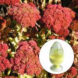 Rhodiola Rosea Rosavins 1 % ~ 15 % Extrait de Rhodiola rosea