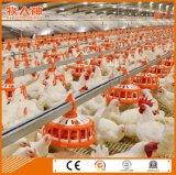 Équipement agricole dans la maison de poulet avec construction en acier
