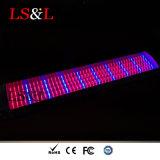 Red+azul LED impermeável de onda Growlight Linear