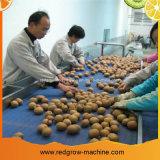De Machine van de Transportband van de riem voor Fruit en de Lijn van de Plantaardige Verwerking