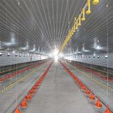 Geschweißtes h-Stahlrahmen-Huhn-Haus für Geflügelfarm