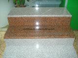 G562 Plakken van het Graniet van de Esdoorn de Rode