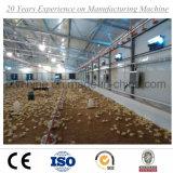 Azienda avicola d'acciaio della tettoia del pollo