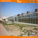 중국 상업적인 지적인 Multispan 유리 온실