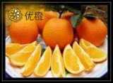 Het verse Oranje Fruit van de Citrusvrucht