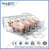 돼지 농장 분리된 임신 기간 크레이트
