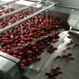 SUS 304 de Automatische Groente/Wasmachine van Rozijnen