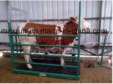 Precio competitivo de la venta caliente del diseño de Alemania y escala de plataforma del ganado de la buena calidad