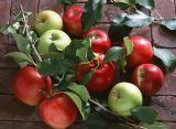 Phlorizin 98%Apple Schalen-Auszug, Phloretin, Apple-Frucht-Auszug