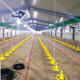 Vorfabriziertes Gebäude-verschüttete Stahlschicht-Huhn-Geflügel für Algerien