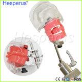 치과 스테인리스 간단한 맨 위 모형 Hesperus 치과의사 모형
