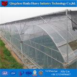 아시아 작풍 다중 경간 토마토 딸기를 위한 많은 온실 갱도