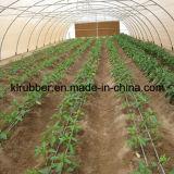 Sgocciolatura Irrigation Equipment per Agriculture Greenhouse