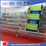 Oiseaux du poulet Cages120 de câble d'alimentation de poulet de Jinfeng/jeu