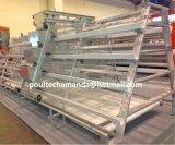 Système de cage de poulet de grilleur/viande pour la ferme avicole (un type bâti)