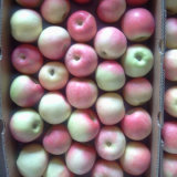 Buena calidad fresca Manzana gala